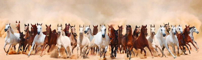 Horses herd running in the sand storm