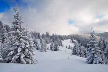 Fototapete - Winter in the mountain forest