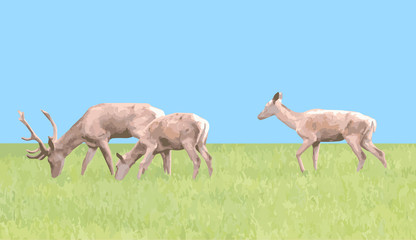 family of deer, vector drawing