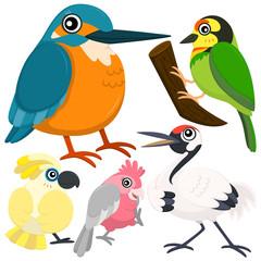 bird set-06