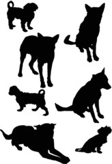 seven black isolated on white dogs