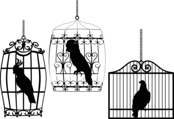 Printed roller blinds Birds in cages collection of birds in cages on white