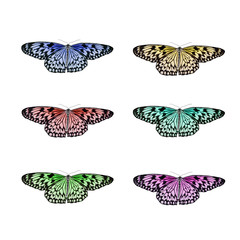 Butterfly isolated collage