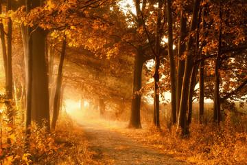 Wall Mural - Wanderweg in goldener Herbstsonne und Nebel