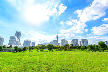 Landscape grass prospects the Yokohama city buildings in Japan