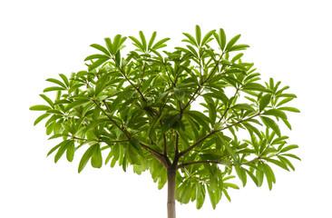 small leaf at single high tree