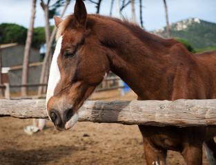Head of a beautiful horse