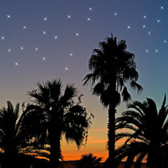 palms and stars