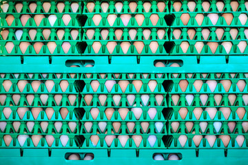 Crates with fresh eggs on an organic chicken farm