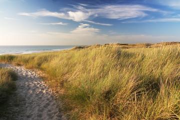 Fototapete - Dünen am Strand von Sylt an der Nordsee im Abendlicht