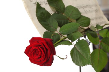 red rose and old notes Sheet music