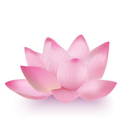 Photo-Realistic Lotus Flower