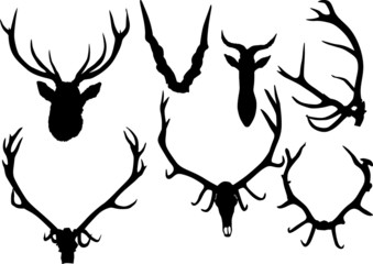 collection of antler and horns isolated on white