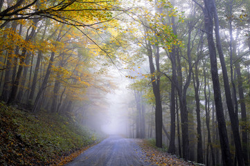 Fototapete - Foggy Road in Autumn
