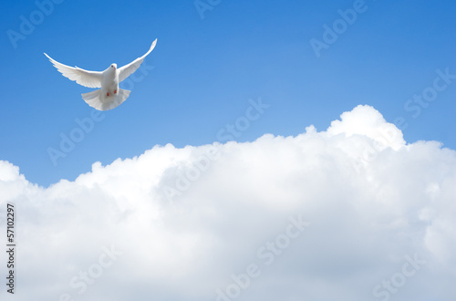 Wall mural White dove flying in the sky