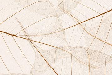 Foto op Canvas Decoratief nervenblad Leaves texture