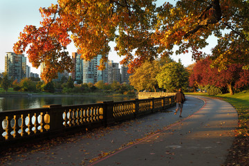 Morning Jog, Stanley Park, Vancouver Wall mural