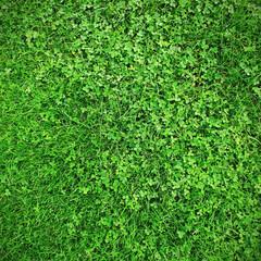 Grass nad clover