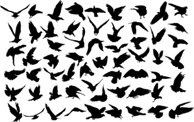 Set of 60 silhouettes of birds