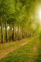 Farm Field Path Leads into Distance Along Tree Row Sunlight