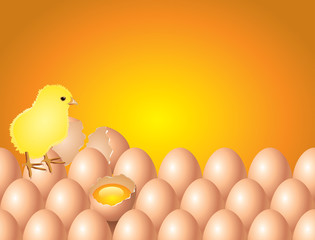 Chicken on eggs easter background in vector