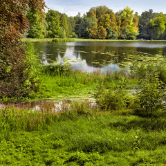 Fototapete - The lake in the park.