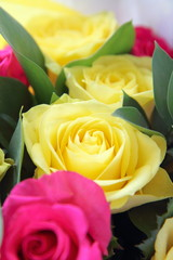 Yellow and red roses on white background