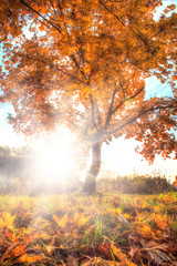 Autumn landscape with dominant tree