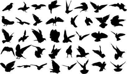 Set of 40 silhouettes of birds