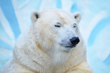 Медвежонок спит.