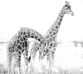 Cartoon giraffe - coloring page - illustration