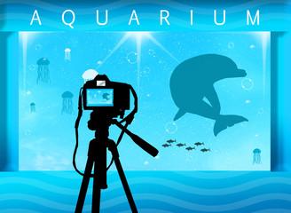 Photo in the aquarium
