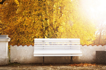 Bench in autumn with lots os sunshine
