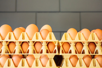Crates with fresh eggs in front of a grey wall
