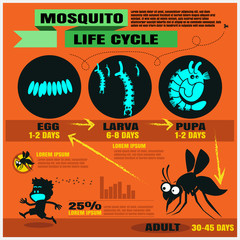 mosquito's life cycle vector background