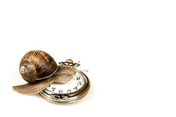 Escargot beating time