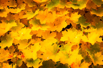 Background of autumn yellow leaves