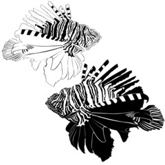 marine aquarium fish Zebra Lionfish samara