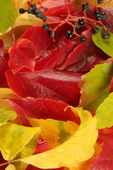 kolory jesieni-liście