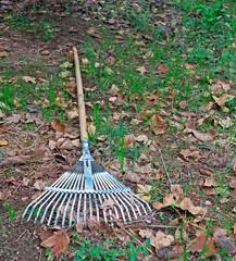 rake on the ground