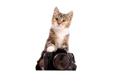 junge Katze mit Digitalkamera