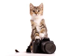 Katzenbaby mit Kamera
