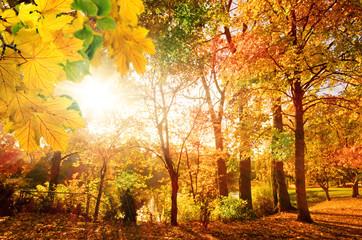 Wonderful day in autumn