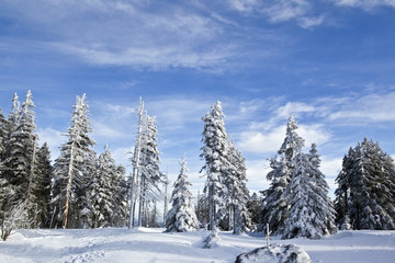 Trees covered in snow in sunny weather and blue sky