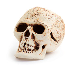 Human skull isolated on a white background.