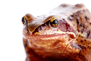 Portrait of a frog.