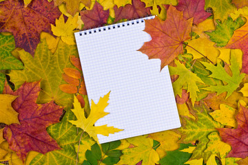 Paper in the autumn background