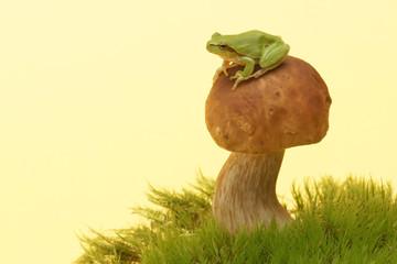 Tree frog (Hyla arborea) on mushroom, Boletus