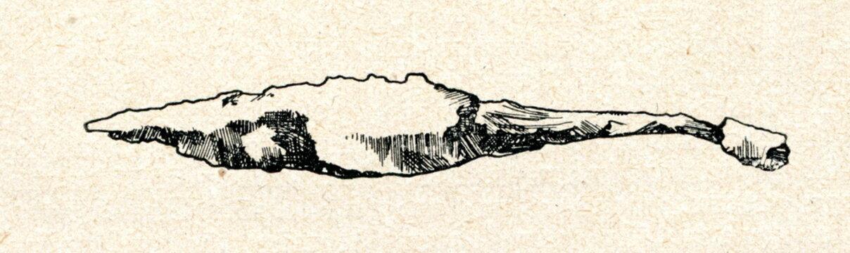 Iron spearhead (Kokmuizha, Latvia)