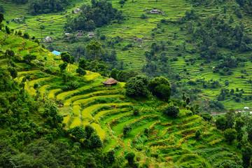 Wall Murals Nepal Terraced rice fields. Himalayas, Nepal